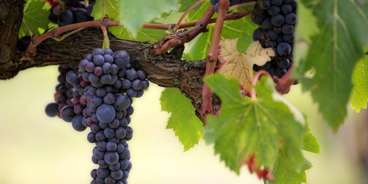 Un cabinet s'occupe de recruter les meilleurs candidats dans le monde du vin